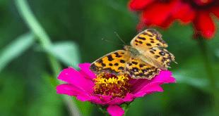 kupu-kupu di tanan bunga