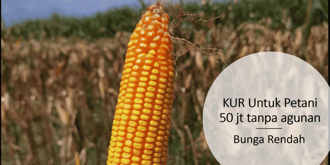 KUR untuk petani 50 juta tanpa agunan dengan bunga 6% ...