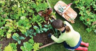tips memiliht tanaman