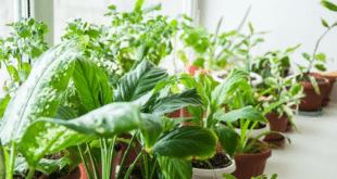 merawat tanaman dalam pot