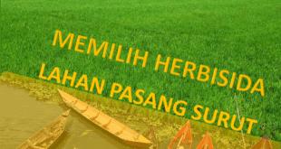 memilih herbisida lahan pasang surut